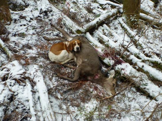 2012.02.21番犬4