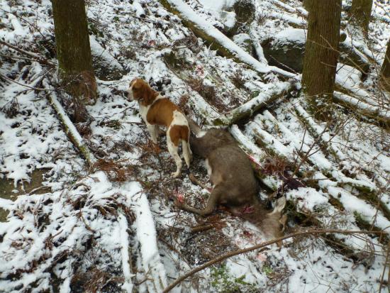 2012.02.21番犬3