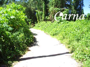 グアム/ココス島でサイクリング3