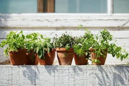 horta-em-apartamento-dicas-para-cultiva-las-4-512.jpg