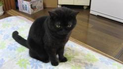 CAT018-1.jpg