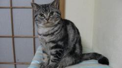 CAT022-1.jpg