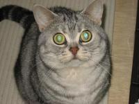 CAT023-1.jpg
