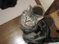 CAT024-1.jpg