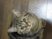 CAT027-1.jpg