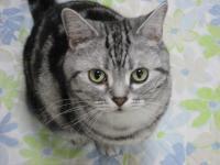CAT028-1.jpg