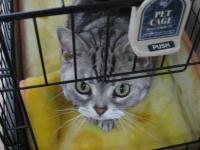 CAT035-1.jpg