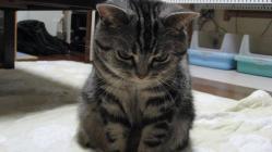 CAT042-1.jpg