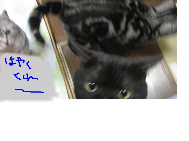 snap_catberry6_201122231319.jpg