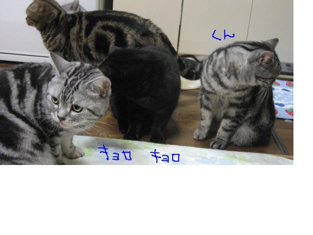 snap_catberry6_201122231656.jpg