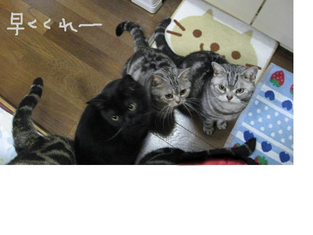 snap_catberry6_2011222317.jpg