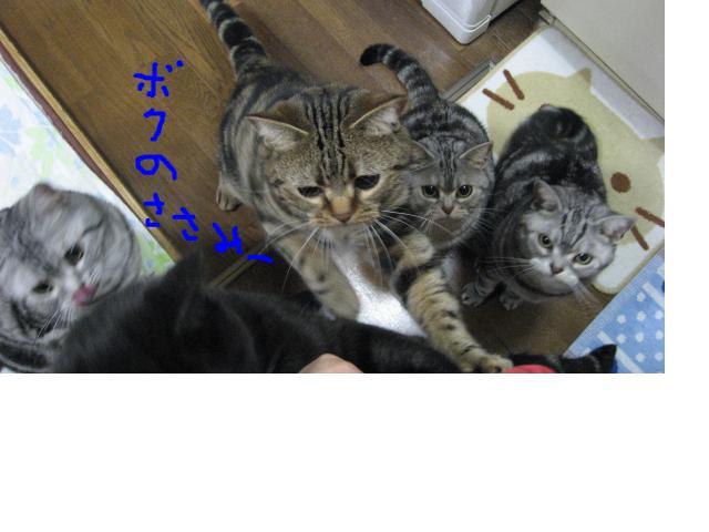 snap_catberry6_20112223230.jpg
