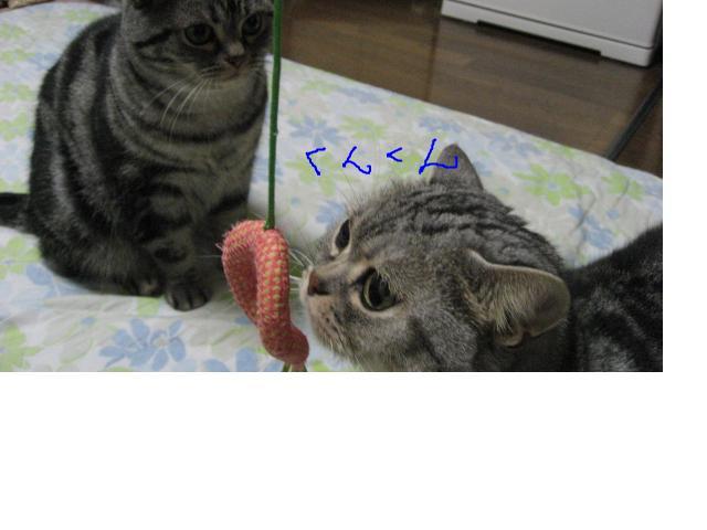 snap_catberry6_20112322397.jpg