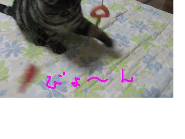 snap_catberry6_201123225618.jpg