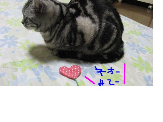 snap_catberry6_201123231018.jpg