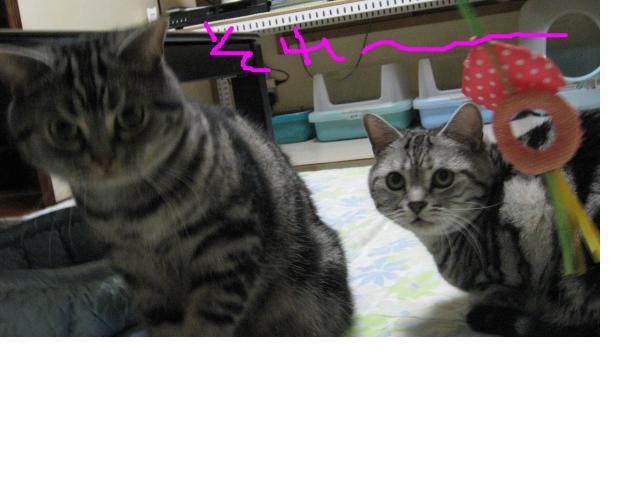 snap_catberry6_201123231329.jpg