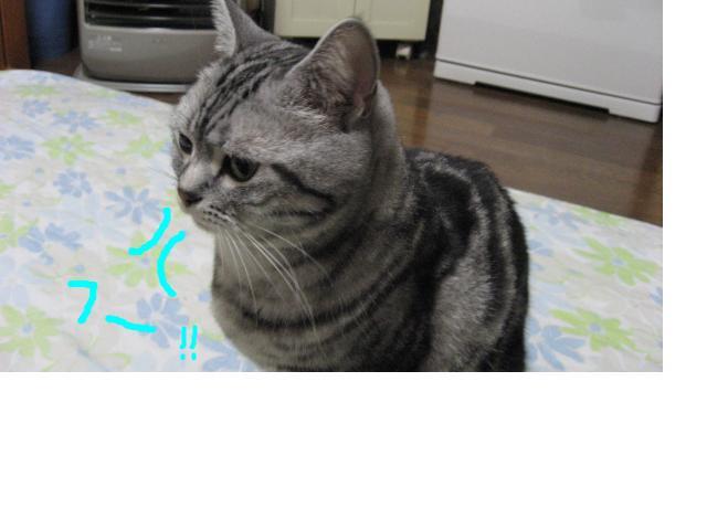 snap_catberry6_201123232347.jpg