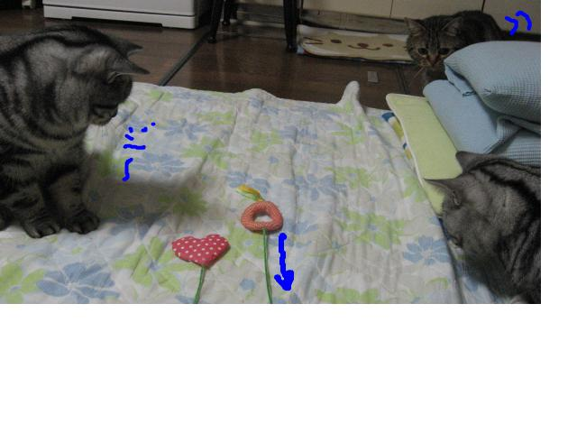 snap_catberry6_20112323711.jpg