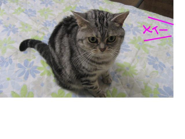 snap_catberry6_201126183511.jpg