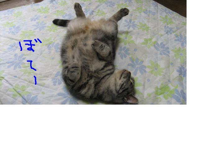 snap_catberry6_20112618407.jpg