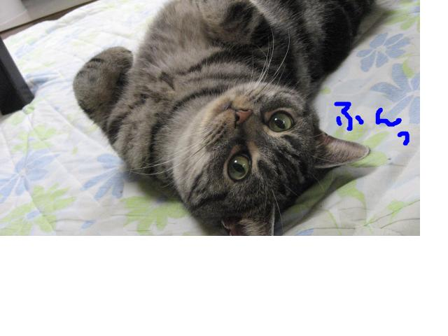 snap_catberry6_201126184516.jpg