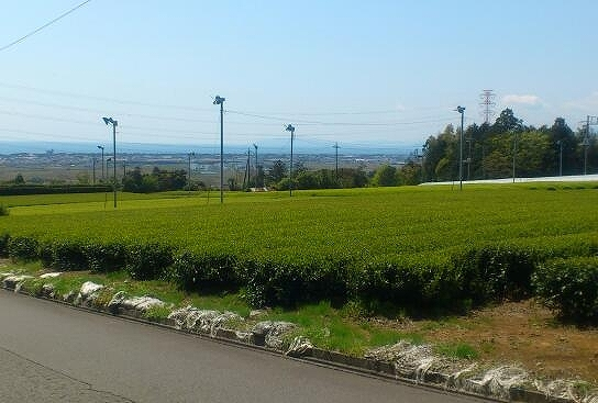 茶畑20130413