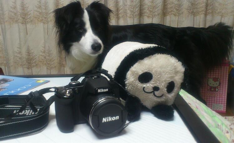 キャッチとカメラ20130415