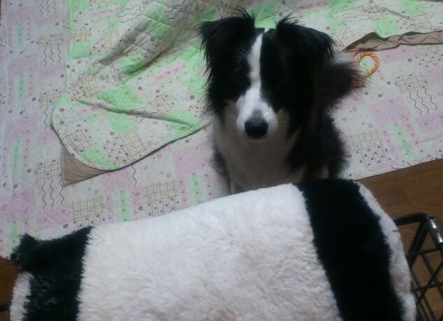 キャッチとパンダさん20130502①