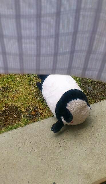 パンダさん20130512