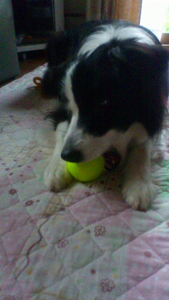 キャッチとテニスボール20130529②