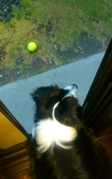 キャッチとテニスボール20130529③