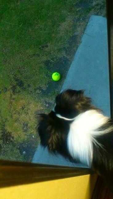 キャッチとテニスボール20130529④
