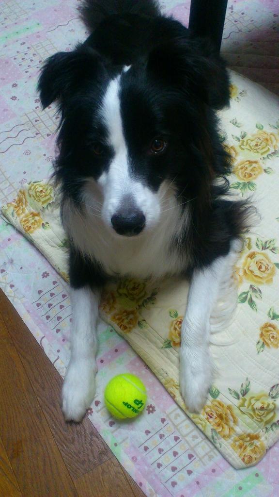キャッチとテニスボール20130529⑤