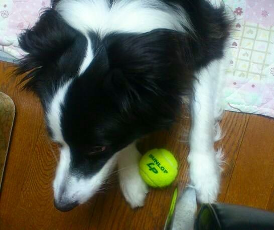 キャッチとテニスボール20130530①