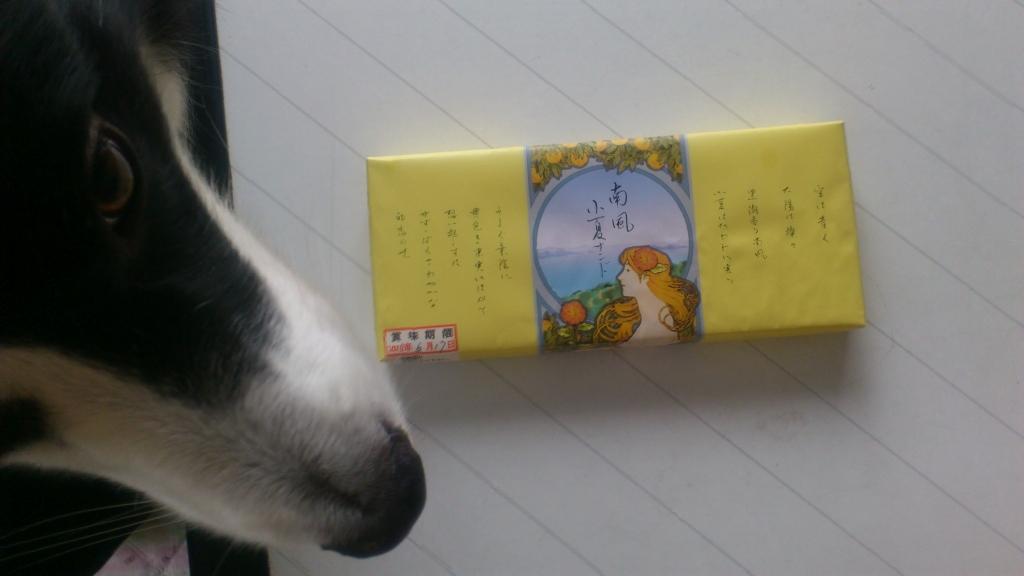 s-キャッチとお土産20130609