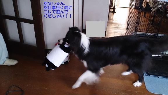 Sキャッチ20130617①