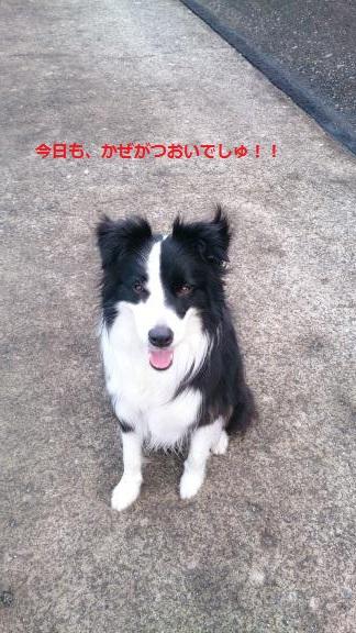S-きゃっち20130619-4