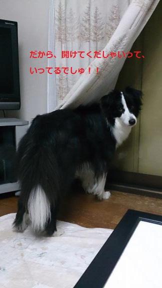 S-きゃっち20130620-4
