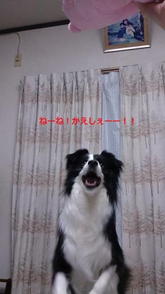 S-きゃっち20130621-3