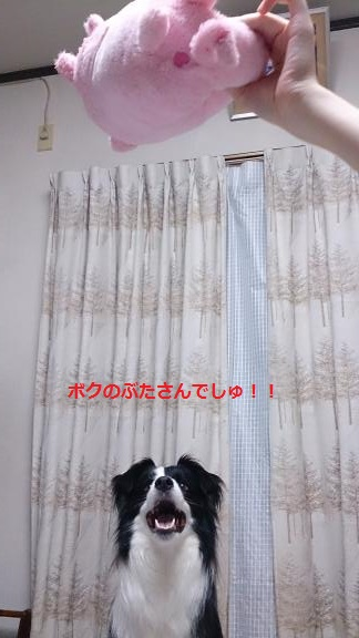 S-きゃっち20130621-1