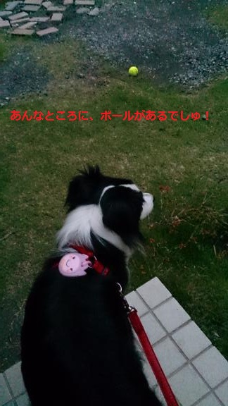 S-きゃっち20130625-1