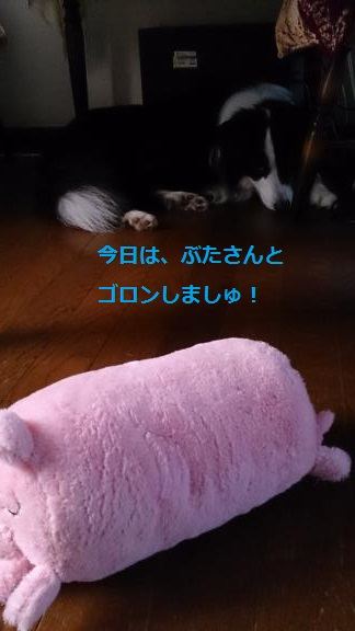 S-きゃっち20130626-4