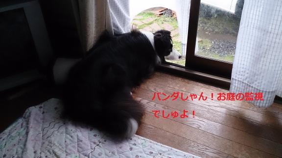 S-きゃっち20130626-5