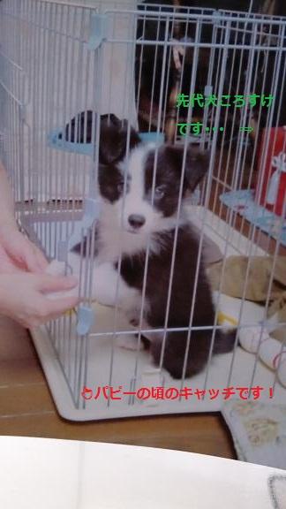 S-きゃっち20130626-6