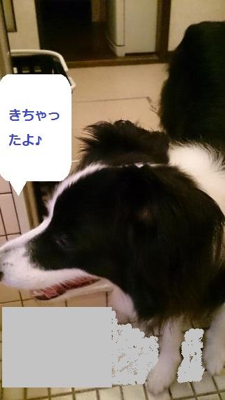S-きゃっち20130627-7