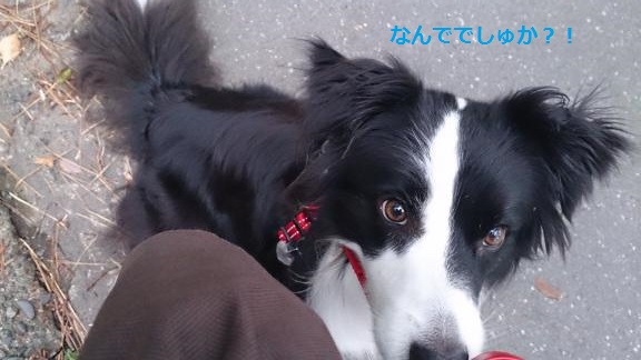 S-きゃっち20130627-5