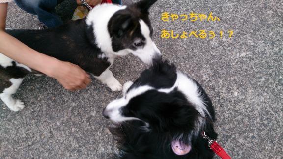 S-きゃっちとワルツ20130628