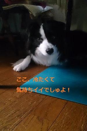 S-きゃっち20130702-1