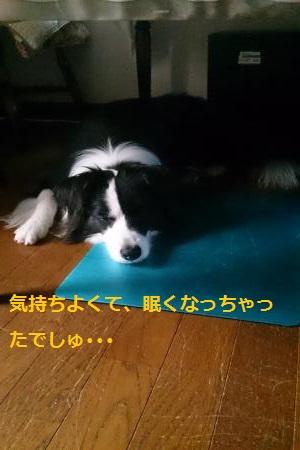 S-きゃっち20130702-2