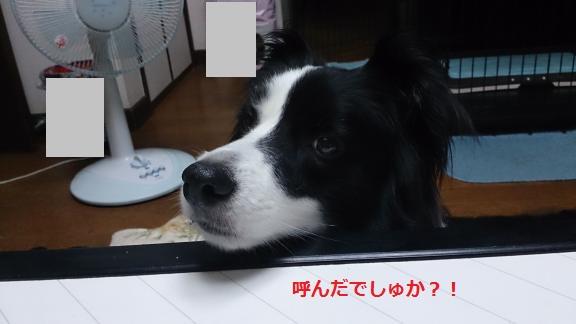 S-きゃっち20130702-4